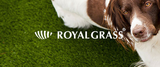 dog friendly lawn