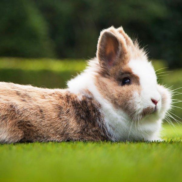 All animals love fake grass