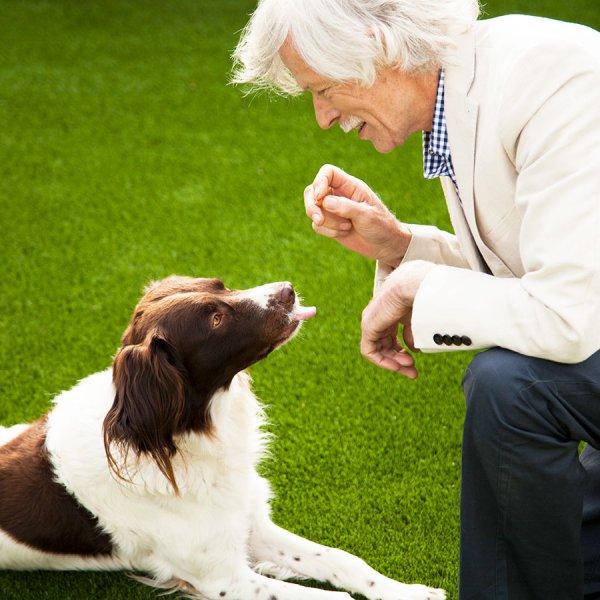 dog-on-artificial-grass