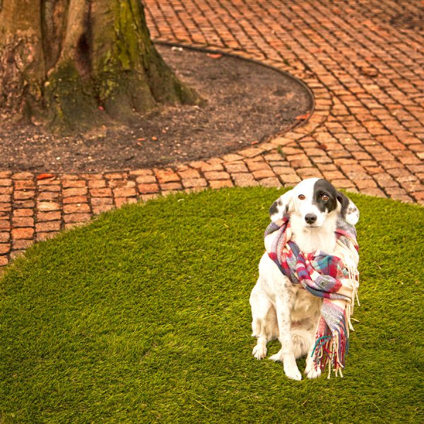 dog-on-the-grass