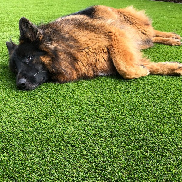 dog-resting-on-the-fake-grass
