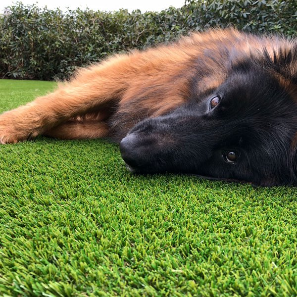 fake-grass-for-dogs