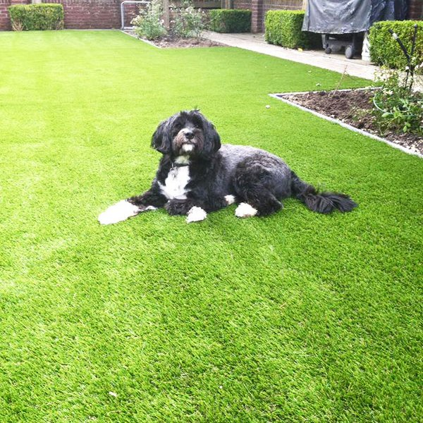 synthetic-lawn-with-a-dog